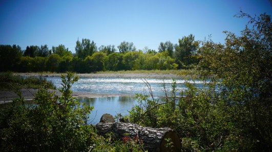 The view across the Bow River from St. Patrick's Island.